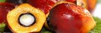 Faut-il revoir notre point de vue sur l'huile de palme ?